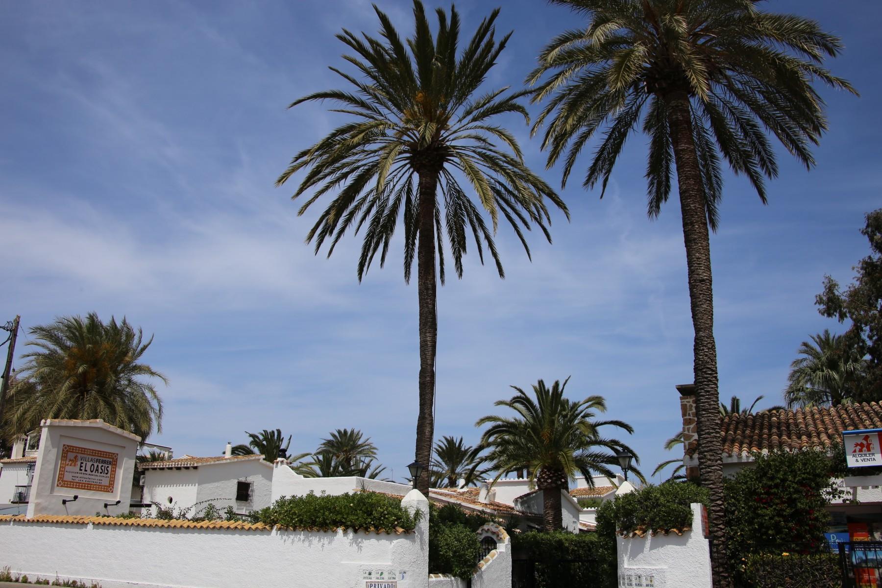 Al Final De La Palmera Calendario.Villa La Palmera 1ª Linea Playa